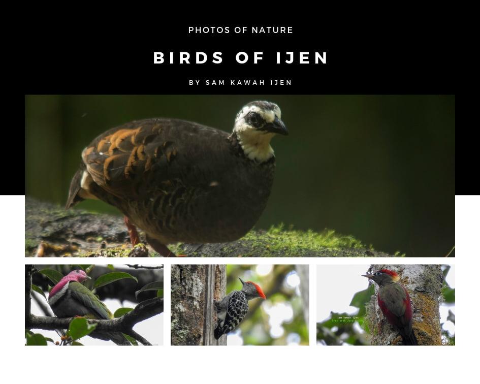ijen birding tour